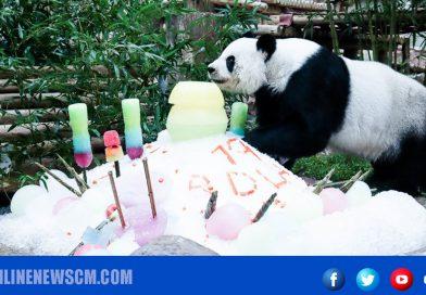 กงสุลใหญ่จีน ประจำเชียงใหม่  ร่วมงานฉลองวันเกิดครบรอบ 19 ปีหมีแพนด้าหลินฮุ่ย